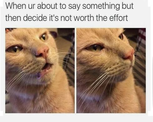 24 Fresh Cat Memes You Have To See This Caturday